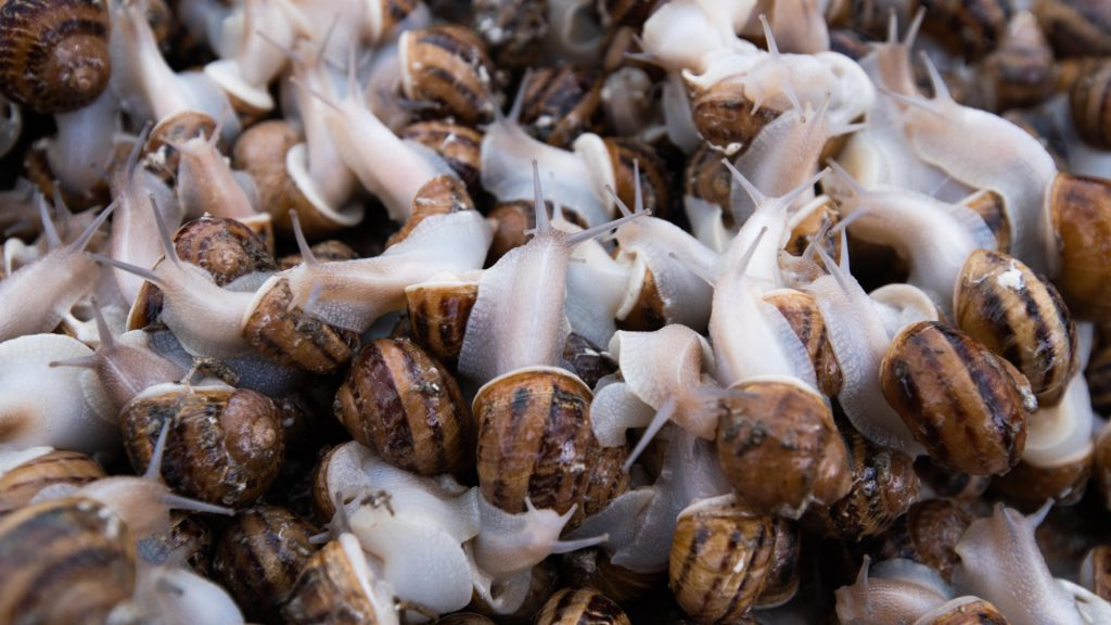 snail-farming-in-nigeria