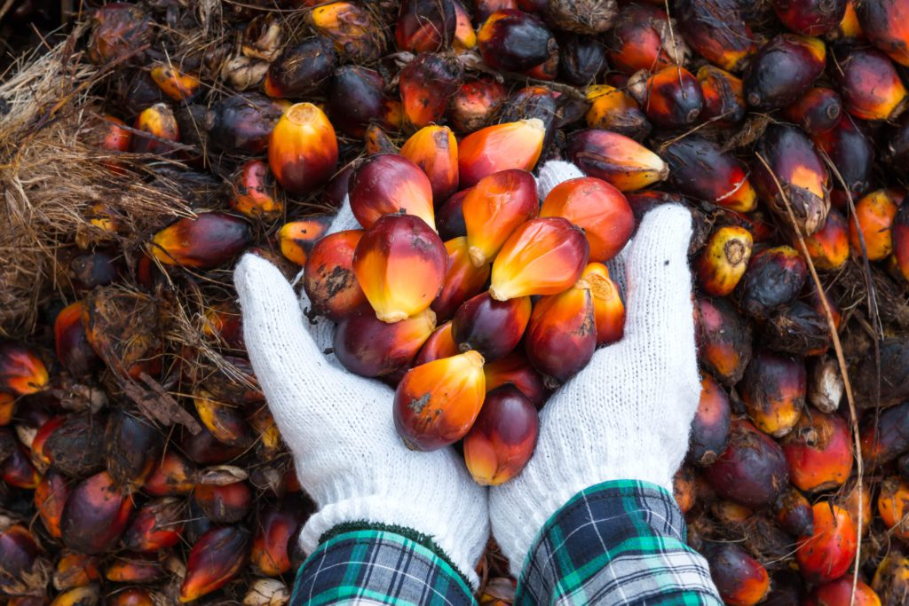 how-to-start-palm-oil-business-in-nigeria